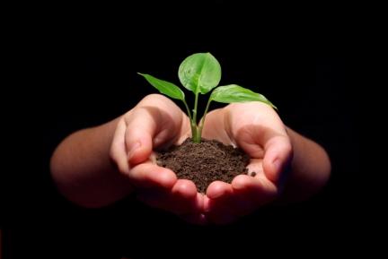 Hands holding sapling in soil