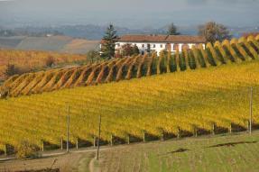 vigne-autunno-2016